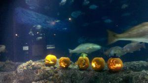 2011 09 30 15 52 19 549 600x337 Charleston Crew rolls deep wth the South Carolina Aquarium for Halloween